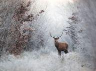 deer-winter-snow-frost_82985_990x742