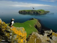 puffin-shiant-island-national-geographic-wallpaper