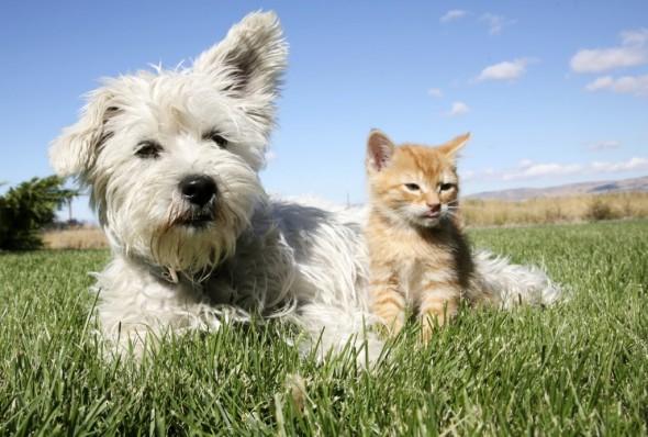 Dog-Cat-1024x691
