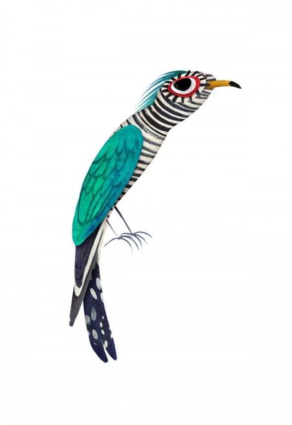 Asian_emerald_cuckoo_brendan_wenzel-1000x1455