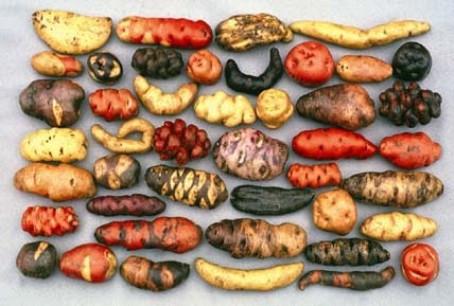 ingredientes-ancestrales-de-la-cocina-peruana
