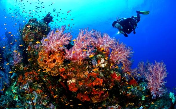scuba-diving-sabah